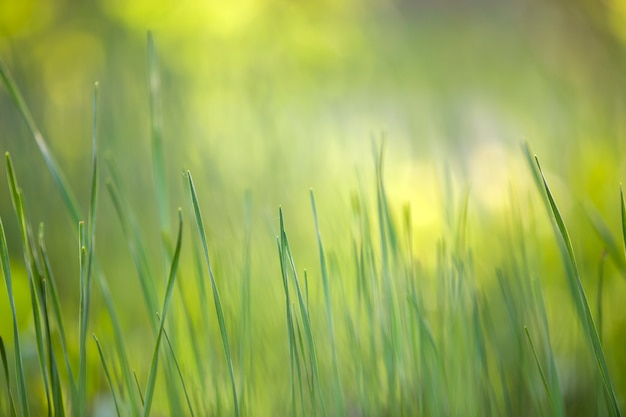 Free Download Grass Brush Photoshop|Grass Brush Photoshop ...