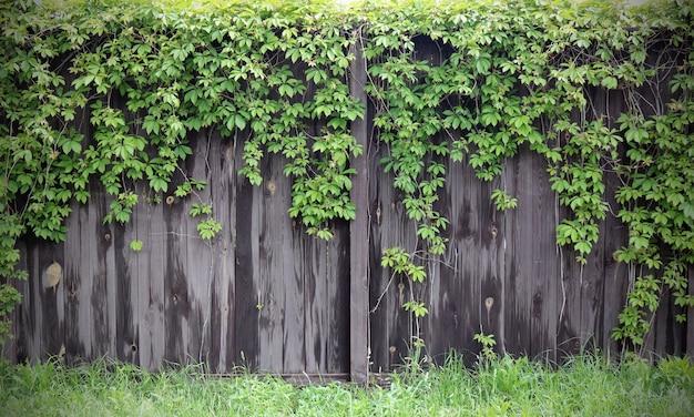 Яркое фото деревянных ворот в сельской местности с растительностью Premium Фотографии