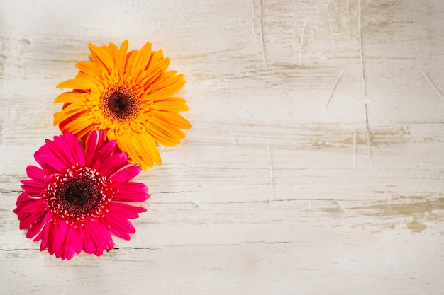 Bright pink and orange flowers on wood photo free download bright pink and orange flowers on wood free photo mightylinksfo