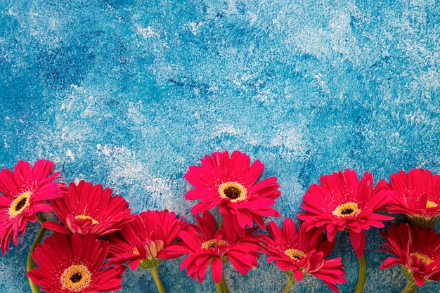 Bright red berbera on blue and white acrylic paint background Premium Photo