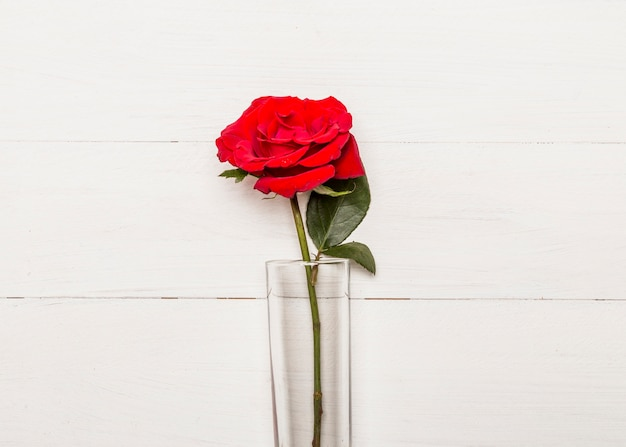 Bright red rose in glass on white surface Free Photo