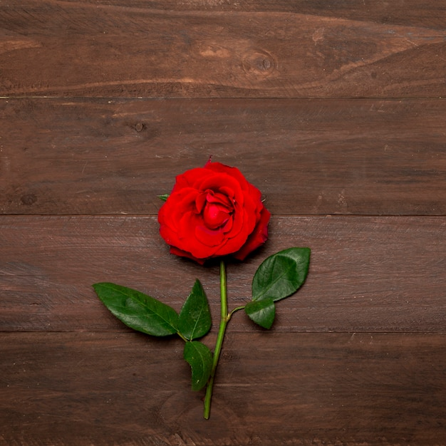 Bright red rose with green leaves on wooden surface Free Photo