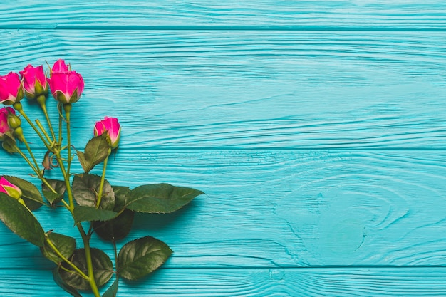 Bright roses on turquoise background Free Photo