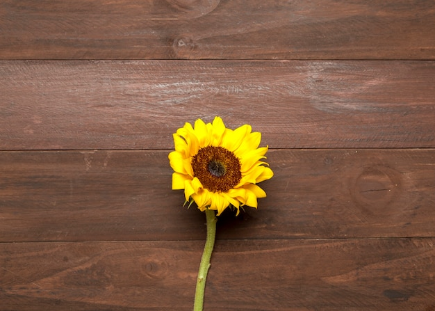 Bright sunflower on wooden background Free Photo