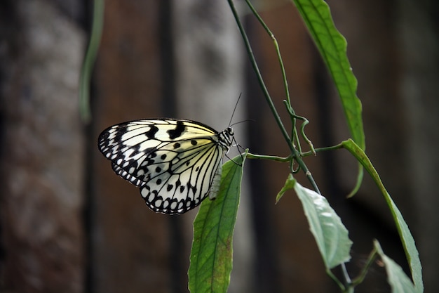 Bright transparent butterfly Free Photo