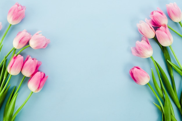 Bright tulip flowers on blue table Free Photo