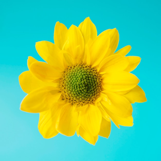 Bright yellow flower on blue photo free download bright yellow flower on blue free photo mightylinksfo