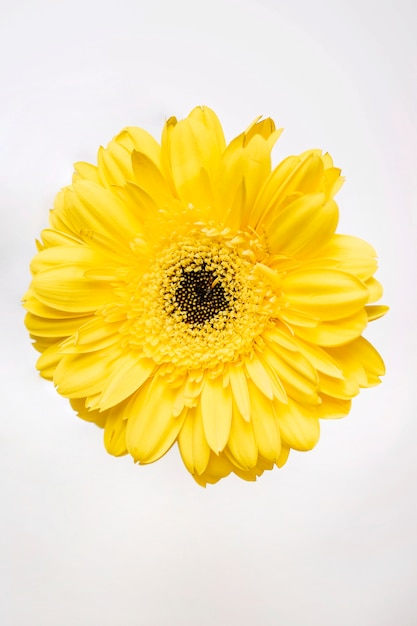 Bright yellow flower on white photo free download bright yellow flower on white free photo mightylinksfo