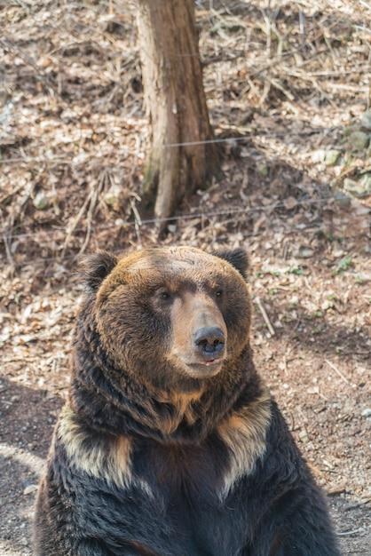Brown bear Free Photo
