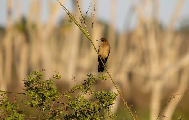 Uccello di gruccione marrone appollaiato su un ramo Foto Gratuite