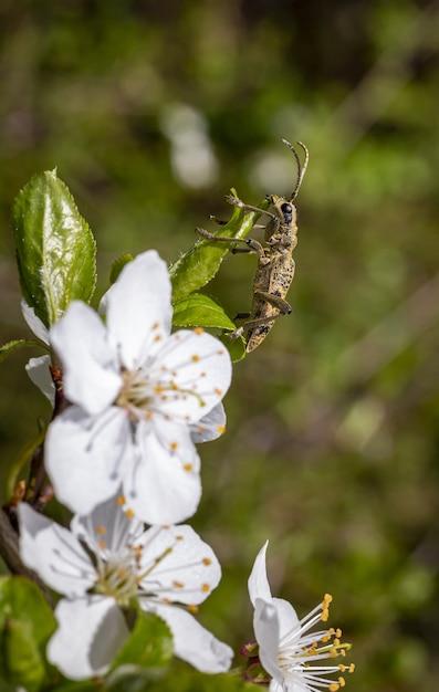 Scarabeo marrone che si siede sul fiore bianco Foto Gratuite