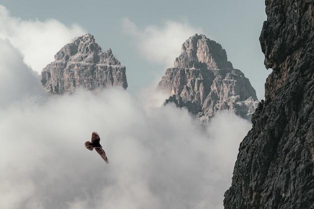 Brown bird flying near mountain Free Photo