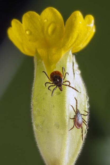 Scarabeo marrone e nero sul fiore giallo Foto Gratuite