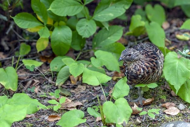 Uccello marrone e nero in piedi sul terreno circondato da molte foglie verdi Foto Gratuite