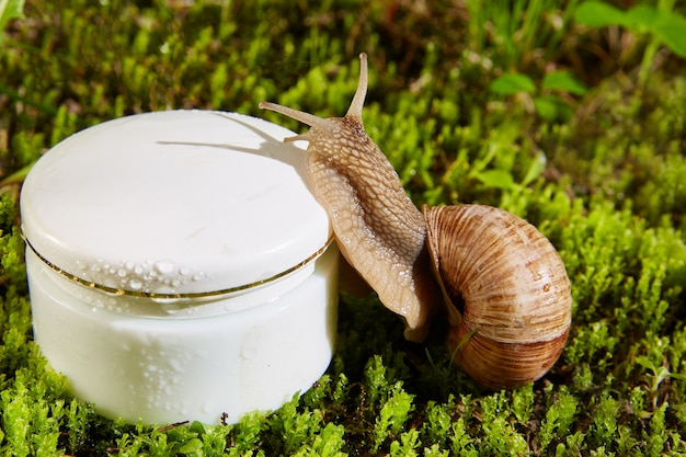 Brown burgundy snail on a cosmetic white cream container in a jar on a natural wall of green moss. Premium Photo
