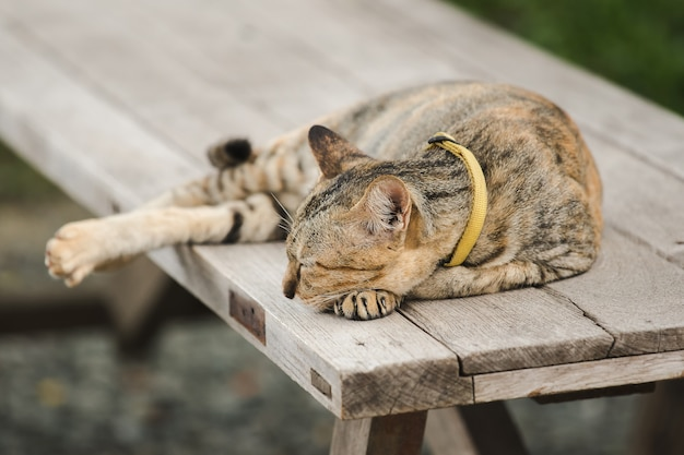 Brown cat lying on an old wooden chair Premium Photo