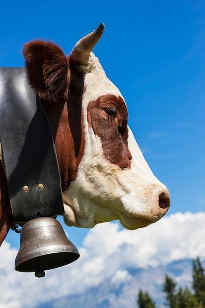 アルプスの山、フランスの茶色の牛 Premium写真