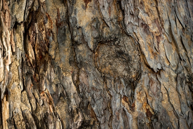 The brown and dried bark on the tree has rough texture. Premium Photo