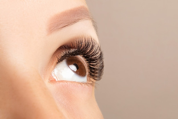 Brown eye with beautiful long lashes close-up. brown color eyelash extension Premium Photo