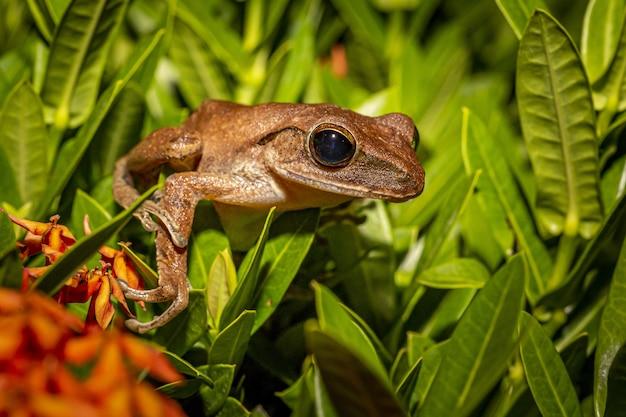 Rana marrone su foglie verdi si chiuda Foto Gratuite