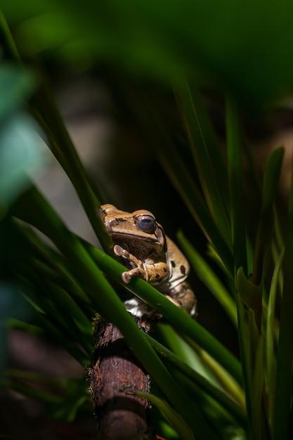 녹색 줄기에 갈색 개구리입니다. 무료 사진