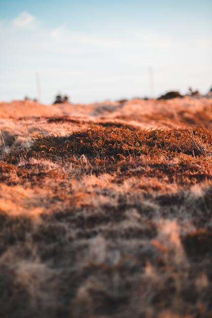 昼間の茶色の芝生フィールド 無料写真