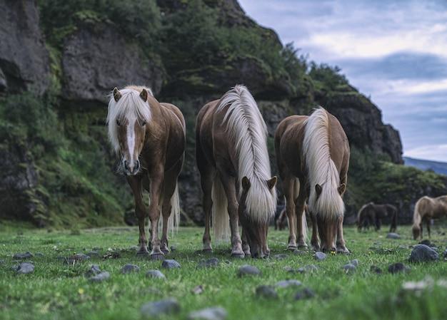 昼間に緑の芝生のフィールドで草を食べる茶色の馬 無料写真