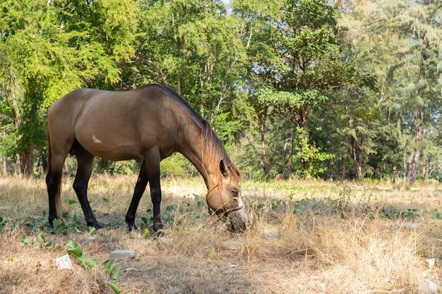 Brown horse eating grass Premium Photo