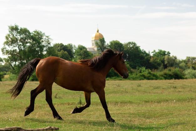 Brown horse walks in pasture Premium Photo