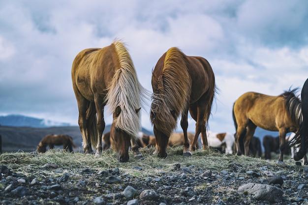 昼間の茶色の馬 無料写真