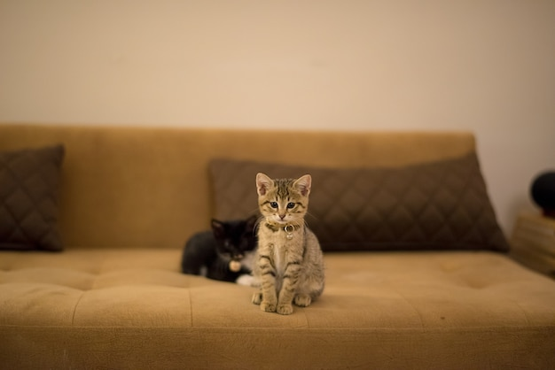 枕の近くの茶色のソファで遊ぶ茶色の子猫と黒い子猫 無料写真