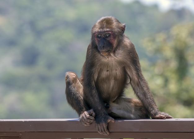 Scimmia marrone nel suo habitat naturale Foto Gratuite