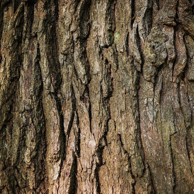 Brown oak bark can be used for background Premium Photo