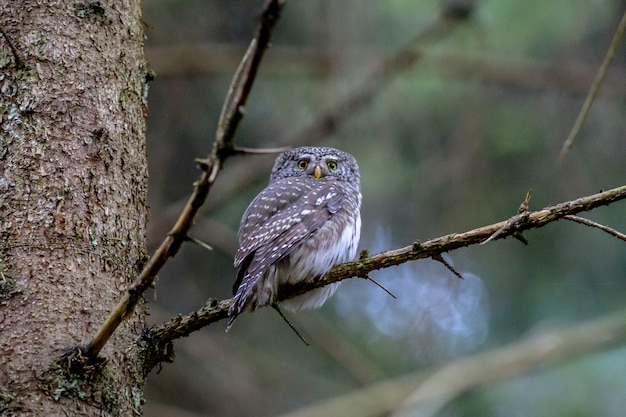 Brown owl perched on tree branch Free Photo