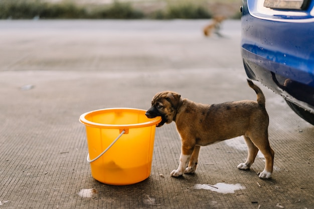 Brown puppy are biting the tank of car wash Premium Photo