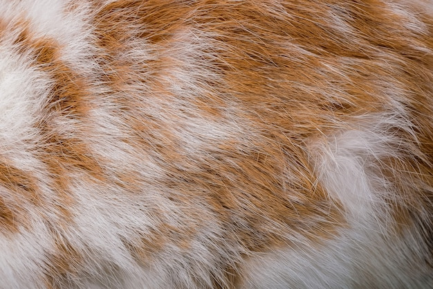 Brown rabbit fur texture and animal skin background Premium Photo