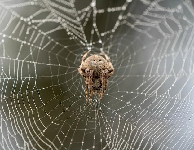 背景がぼやけているクモの巣に登って茶色のクモ 無料写真
