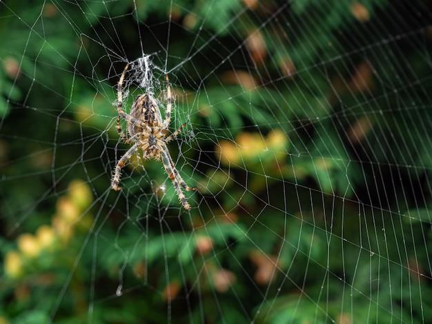 昼間の自然な網を作る茶色の縞模様のクモ 無料写真