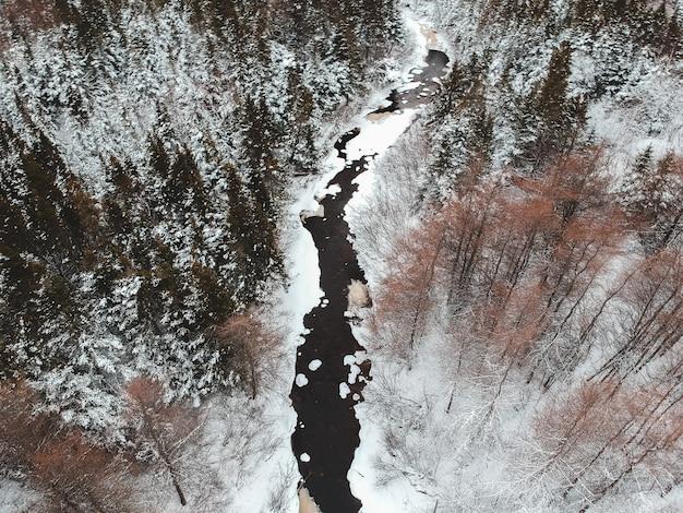 Коричневые деревья покрыты снегом в дневное время Бесплатные Фотографии