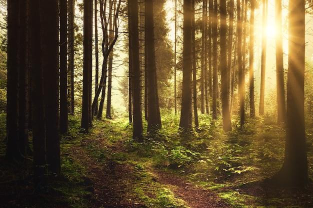 昼間の森の茶色の木 無料写真