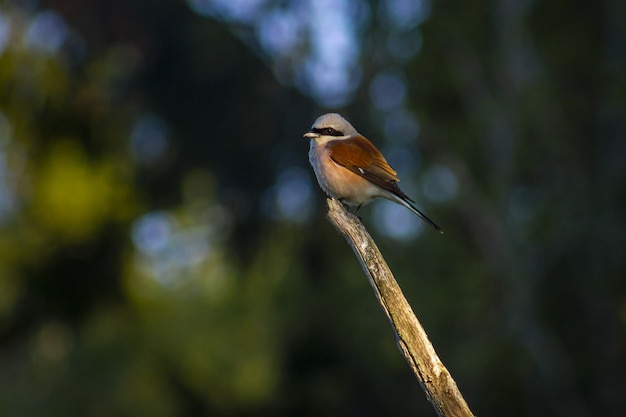 Brown and white bird on brown tree branch Free Photo