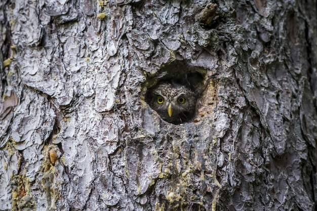 Brown and white owl inside tree hole Free Photo
