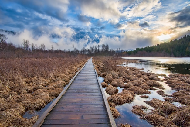 Brown wooden dock in middle of hay Free Photo