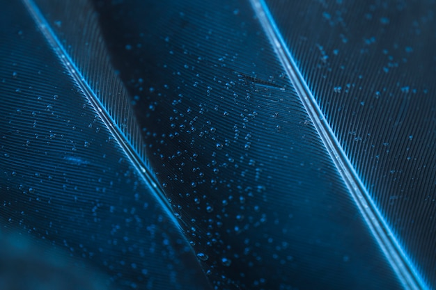 Bubbles on blue feather texture backdrop Free Photo