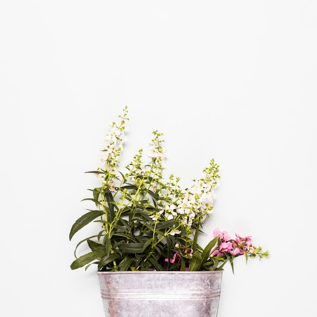 Bucket with white and pink flowers Free Photo