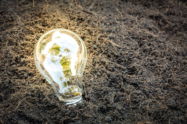 Bulb with plant growing inside Free Photo