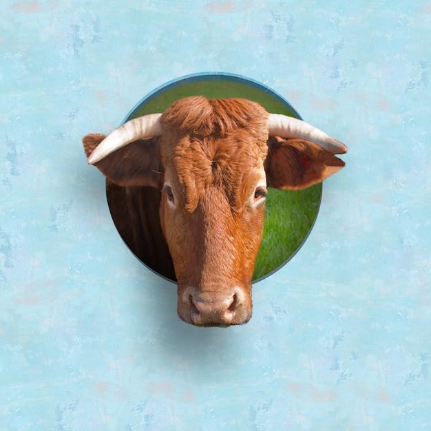 황소의 머리 무료 사진