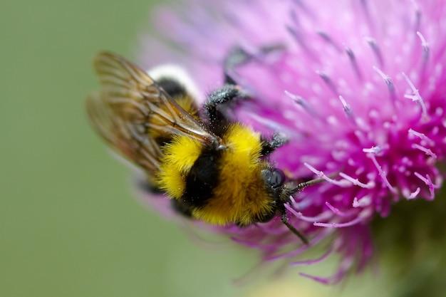 Bumblebee Images | Free Vectors, Stock Photos & PSD