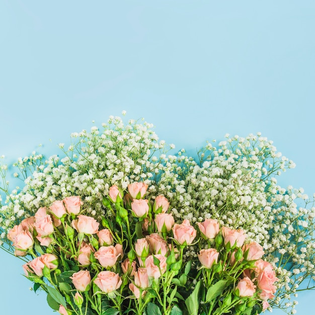 Bunch of baby's-breath flowers and pink roses on blue background Free Photo