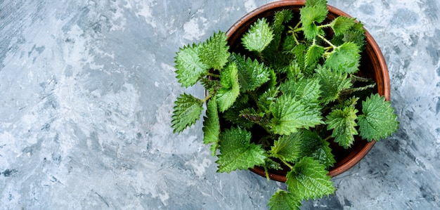 Bunch of common nettles Premium Photo